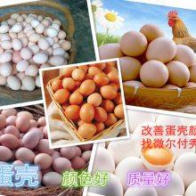 如何增加蛋壳厚度增加蛋重提高经济效益