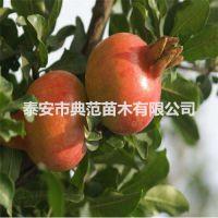 突尼斯软籽石榴苗 突尼斯软籽石榴苗价格 品种介绍