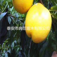 中油21号桃树苗价格 产地批发优质中油桃树苗
