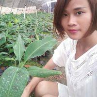 广东哪里有香蕉组培苗厂家 粉蕉苗批发大型育苗基地13877713093