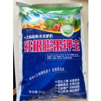 大棚黄瓜膨果钾宝高钾高钙冲施肥旺根膨果钾宝
