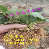 http://himg.china.cn/1/4_831_240392_800_800.jpg