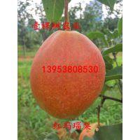 红玛瑙梨树苗 红玛瑙梨树一亩地栽多少棵