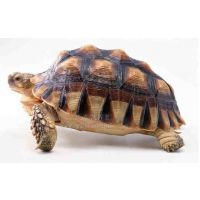 厂家直销 动物雕像 仿真乌龟 仿真动物 创意工艺品