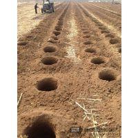 河北植树挖坑机 沧州植树挖坑机 林业机械领导者