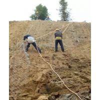 三水园林承接各类岩石土质边坡绿化客土喷播机植草工程