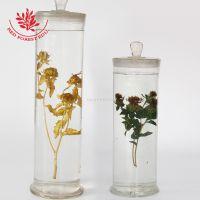 新品推荐标本馆展览装饰品浸渍标本红花腊叶标本红花生药标本红花