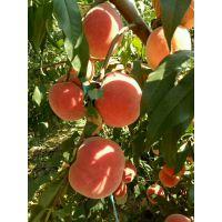 珍品王桃桃苗多少钱一棵 珍品王桃桃苗品种特性