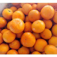 糖度的柑橘由良蜜桔湖南湖北基地供应柑橘苗