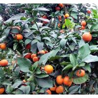 各种果树苗价格【哪家各种果树苗价格便宜】供应各种果树苗