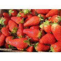 香蕉草莓苗 香蕉草莓苗哪里有卖