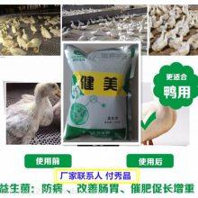 禽用益生菌的功效与作用