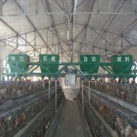 自动喂料机 恒力机械 鸡场自动喂料机优惠