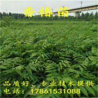 http://himg.china.cn/1/4_852_236588_800_800.jpg