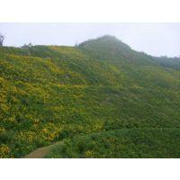 山东客土喷播绿化挂网 CS高次团粒喷播绿化 TBS植被护坡绿化材料包施工