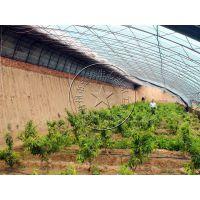 钢结构反季节温室大棚造价多少钱一亩?—青州瀚洋日光温室塑料大棚