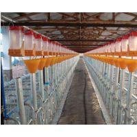 猪用自动喂料系统厂家供应自动化料线
