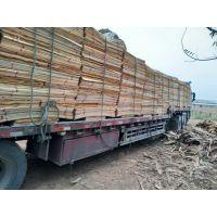 广西鲁安常年供应桉木单板 质量保证