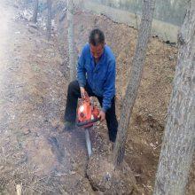 树木采伐用挖树机 可带90导板的挖树机 润众