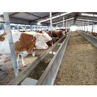 淘汰种公(母)牛育肥技术分享