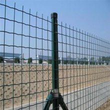 圈果园防护网 圈场地围网 圈鸡网