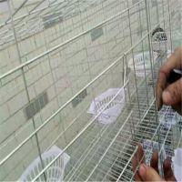 利港笼具生产销售加粗12位鸽子笼12位镀锌肉鸽笼东北鸽笼