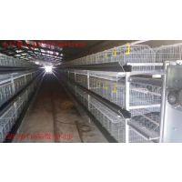 供应小层叠式蛋鸡笼自动化养殖设备厂家直销