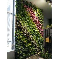 河南青藤园艺为您打造各种植物墙