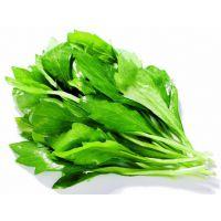 金超多功能蔬菜清洗机小白菜气泡喷淋清洗机