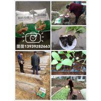 鹤壁市禾盛生物科技有限公司-水稻专用功能菌 13939282663
