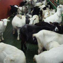 塑料羊粪板厂家 羊漏粪板图片 山东羊床生产厂家
