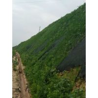 河南景绣 矿山修复案例 客土喷播绿化 山体喷浆绿化放心