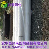 塑料平网小孔 白色1.2孔塑料网 雏鸡养殖网厂家