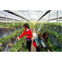 山东草莓种植园薄膜大棚圆拱钢架20米宽、200米长施工报价