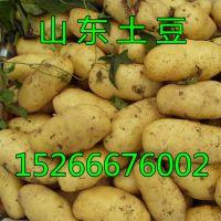 山东荷兰十五土豆价格行情,哪里的土豆价格便宜