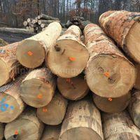 美国宾州进口去皮红橡原木 美式家居材 可锯切板材 专人验货2SC以上