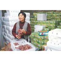 安徽合肥市葡萄保鲜冷藏库厂家建设