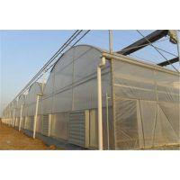 海南生态育苗棚育苗温室大棚连栋、塑料膜型项目承建厂家
