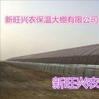 沧州新旺兴农种植大棚71213圆拱蔬菜大棚建设