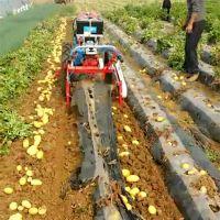 薯类收获机 手扶土豆收获机 花生不伤果子不伤