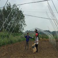温室钢架大棚 8米宽西红柿种植棚架,单体拱形钢架温室钢管