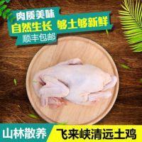 广东天农食品-清远生态食材凤中凤清远鸡|原产地清远麻鸡