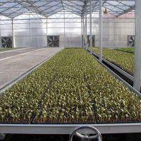 江西连栋大型玻璃墙温室大棚纹络尖顶、育苗种植高端美观