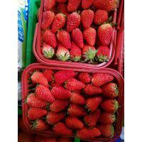 天仙醉草莓苗新报价 天仙醉草莓苗栽培技术 天仙醉草莓苗批发价格
