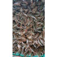 广东小龙虾苗种批发价格 广东小龙虾养殖基地 广东龙虾苗的价格