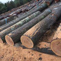 金威木业供应美国宾州白蜡原木 红橡原木 2SC以上 可刨皮 大量批发