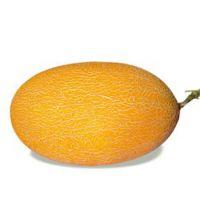 新疆甜瓜种子,瓜大香又甜