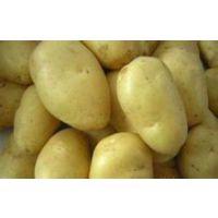 供应河北时丰农业科技开发有限公司蔬菜种子河南十五土豆F4