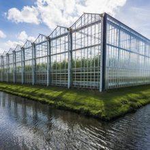 南阳温室大棚|南阳温室|南阳温室公司|南阳温室大棚厂家|河南华科温室