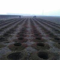 道路绿化栽种挖坑机 双人大型挖坑机